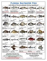 Tackle Box Id Florida Saltwater Fish Identification Card Jumbo Edition 60 Common Fish May 2019 Rules