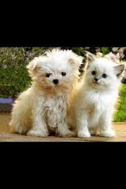 cute kittens and puppies together. Wonderful Cute Cute Puppies Very Funny I Like This Puppies So MuchLovely And  Kittens Looking Very Lovely Ex In And Together N