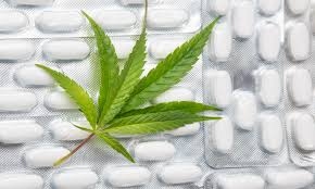 Image result for medical cannabis research