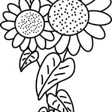 Small Picture Sunflower is Blooming Coloring Page Sunflower is Blooming