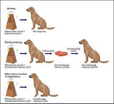 Example Of Classical Conditioning Psyc 342 Learning