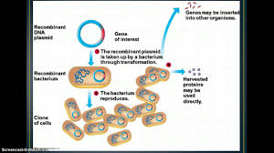biotechnology cloning genetic engineering