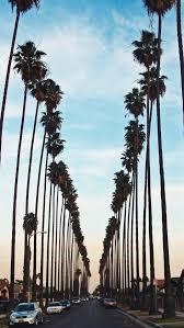 Looking for the best palm tree iphone wallpaper? Iphone Wallpaper Los Angeles Palm Trees 423x750 Download Hd Wallpaper Wallpapertip