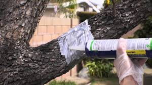 7 Repel Gel Barrier Sealant For Possums Squirrels And Raccoons How To Protect Your Fruit Trees From Squirrels