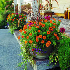 container gardening ideas for front yard