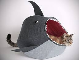 unusual gifts for cat lovers. Fine Gifts Shark Cat Bed  Gifts For Lovers Throughout Unusual