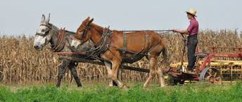 amish people and amish culture com amish people and amish culture