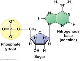Short Note On Nucleic Acids Enotes