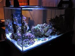 cur usa orbit marine led aquarium light review marine depot blog