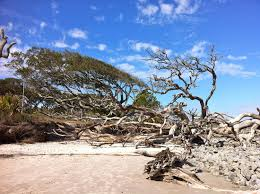 Very Interesting Beach To Walk Review Of Driftwood Beach