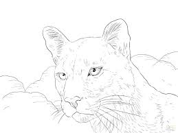 mountain lion coloring pages mountain lion coloring pages mountain lion coloring page mountain lion coloring pages