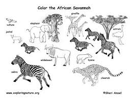 Small Picture African Animals Coloring Pages Image Gallery HCPR