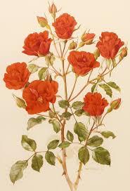 Vintage Floral Print 150 Best Floral Scientific Illustrations Vintage Field Guides