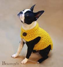 Dog Sweater Crochet Pattern Inspiration Oh My Goodness My Heart Hurts With All This Cuteness Crocheted Dog
