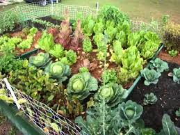 Small Picture Collection Vegetable Garden Landscaping Pictures Garden And Kitchen