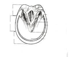 Horse Hoof Anatomy Purposegames