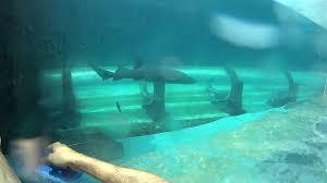 underwater water slide. Simple Slide And Underwater Water Slide E