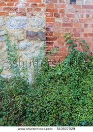 Concrete Wall With Climbing Plants Texture Horizontal Seamless 20817Wall Climbing Plants