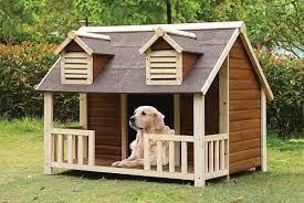 Ngày đầu tiên đón chó về nhà