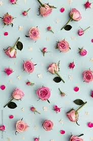 light pink floral background tumblr. Simple Floral Pink Roses And Rose Buds Against A Blue Background Download This  Highresolution Stock Photo By RUTH BLACK From Stocksy United And Light Floral Background Tumblr K