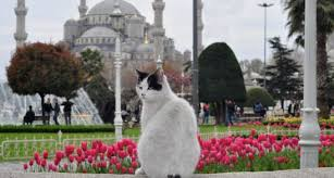 Resultado de imagem para gatos filme istambul