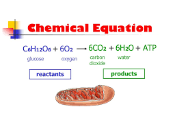 what is the chemical equation for photosynthesis and cellular cell respiration equation talkchannels photosynthesis and word for photosythesis balanced
