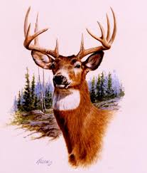 prize buck whitetail deeroriginal watercolor in private collection wildlife paintings original wildlife and big game paintings by jim kil