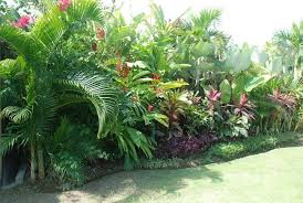 Small Picture tropical garden ideas nz Google Search Gardens Pinterest