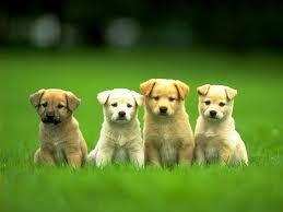 Puppies, Puppy ...