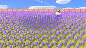 あつ 森 紫 ヒヤシンス
