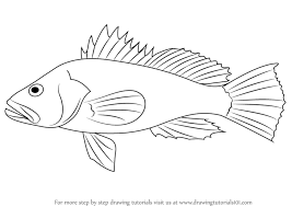 bass fish drawing step by step. Wonderful Step Learn How To Draw A Black Sea Bass Fishes Step By  Drawing Tutorials And Fish By