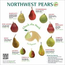 Pear Identification Chart Pear Ripening Chart Related Keywords Suggestions Pear