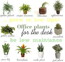pictures for your office. find a way by jwp low light and maintance plants for your office desk pictures