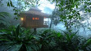 Dream Catcher Kerala 100 Beautiful Tree House Resorts in Kerala For Stunning Natural Views 92