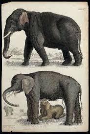 Elephant New World Encyclopedia
