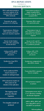 difference between dna replication and transcription definition   difference between dna replication vs transcription comparison summary