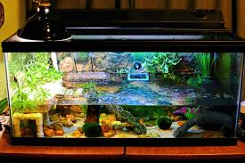 Turtle Tank Decor Mud Turtle Tank Youtube