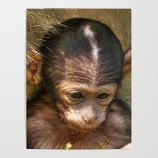 Sweet Baby Monkey Poster By Mehrfarbeimleben