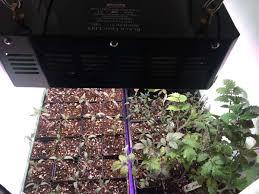 Sowing Seeds Indoors Led Vegetable Garden Black Dog Led