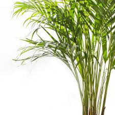 Diese Pflanzen Solltest Du Im Schlafzimmer Haben Air Purifying