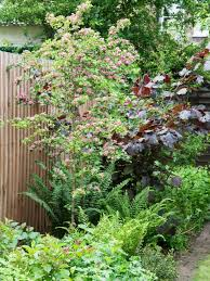 how to plant garden. Hawthorn Tree With Pink Blooms How To Plant Garden D