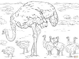 Small Picture Ostrich coloring pages Free Coloring Pages