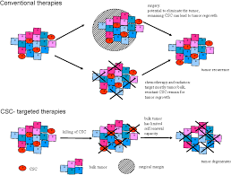 Cancers | Free Full-Text | A Quest for Initiating Cells of Head ...