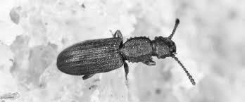 Les insectes xylophages peuvent attaquer des meubles anciens et même les composants structurels d'une habitation. Les Insectes Xylophages Tout Savoir Pour S En Debarrasser