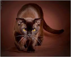 Resultado de imagen de bigotes gato enfadado