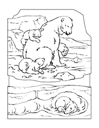 Small Picture bear color pages cute polar bear coloring page cute polar bear