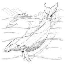 Small Picture Humpback Whale coloring pages Free Coloring Pages