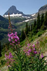 The Brag-Worthy Beauty of Montana's Wildflowers   The Official ...