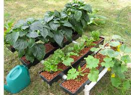 how to build a hydroponic garden. diy hydroponics how to build a hydroponic garden p