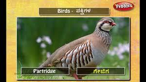 Birds Chart With Names In English Speak Kannada Through English Lesson 06 Birds